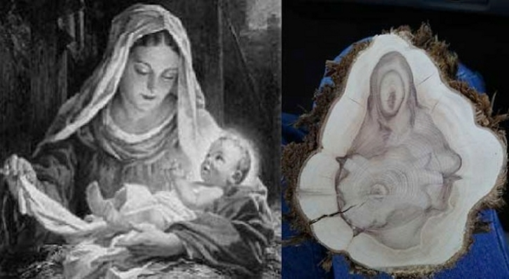 Virgin-Mary-and-Baby-Jesus-Reveal-Themselves-on-Tree-Log-2