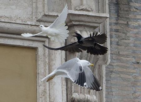 Risultati immagini per corvo e gabbiano attacca colomba